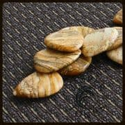 Jasper Tones - Picture Jasper - 4 Picks | Timber Tones